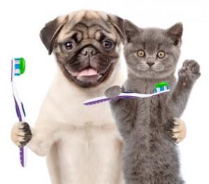 Tierzahnheilkunde